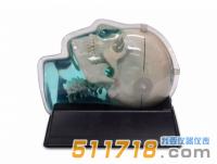 美国CIRS 603A头部体模